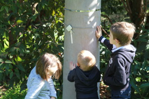 Découvrir l'écorce de l'eucalyptus