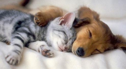 le_sommeil_des_animaux