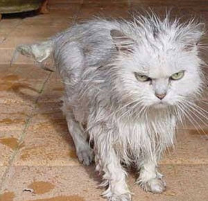 wet-cat-very-angry